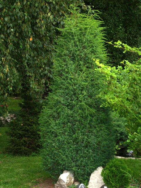 nurga puukool. Black Bedroom Furniture Sets. Home Design Ideas